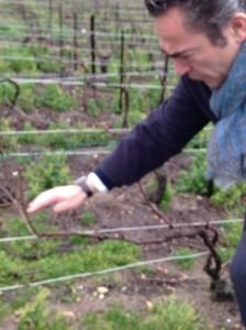 Nicolas explicando el proceso de la poda de la viña